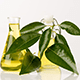 8 Great Reasons To Use Camphor Essential Oil